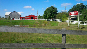 Horse boarding available in stouffville