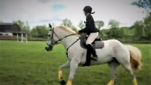 Riding Lessons - English & Western