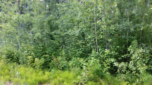 10% OFF OUR BEST RENT TO OWN, TREED, Lesser Slave Lake LOT !