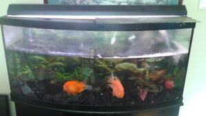 BOW FRONT FISH TANK 76 GALLONS WITH STAND AND FISH
