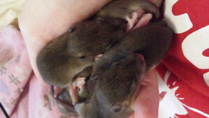 Absolutely Sweet Baby Rats!!
