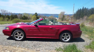 2003  Mustang  convertable  GT for sale