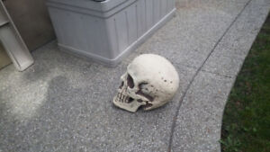 Giant Skull - Perfect for Halloween Decorating