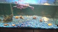 Aquarium et tortue