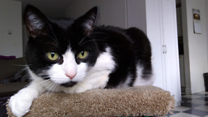 Friendly Cat Looking For A New Home-Free