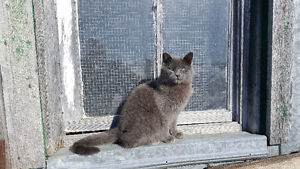 6 month old Grey male Cat needs a Good Home
