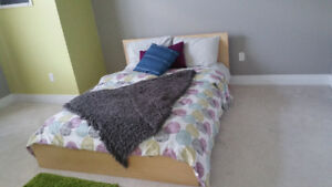 Birch Bed Frame for Sale!