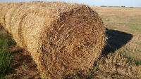 Bales for Sale - Rye Straw