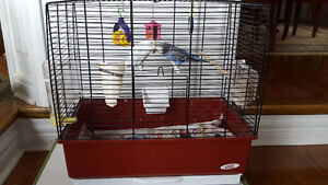 A pair of budgies and cage on Sale
