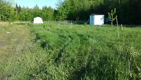 land for sale ready to build .. east hawsbury , ontario