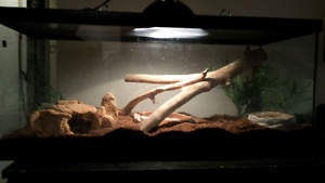 20 gal tank- $80 or best offer