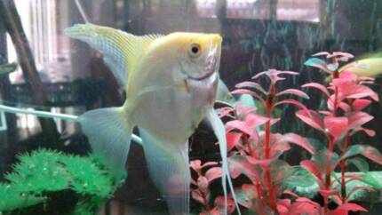"""PRICE REDUCED..!!!! 4"""" Fish tank + Stand + Fish + accessories..."""
