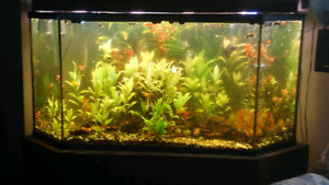 105 Gallon Pentagon corner aquarium