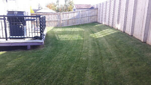 Lawn care, grass cutting