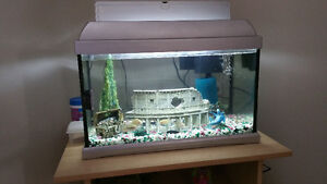 12 gallon tank with fish and few decorative item