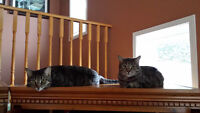 Need a Home for 2 AWESOME cats