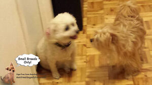*HOLIDAYS FULL* Sleepovers for small dogs in home of trainer West Island Greater Montréal image 4