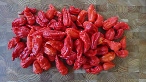 Hot Pepper Seeds, Free shipping Canada wide! Spicey Jams, Plants
