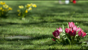 Cemetery Burial Plot for Sale
