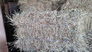 Square baled hay for sale