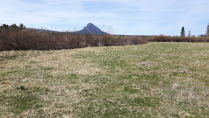 400 acres of  good hay land to be cut or you bring your cattels Williams Lake Cariboo Area image 7
