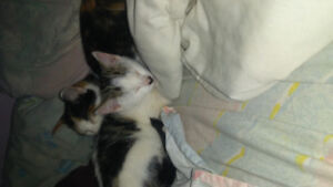 Two kittens to give away