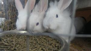 *Adorable Baby Bunnies*