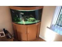 Jewel corner tank with external filter , plenty of rock and Malawi chiclids aswell