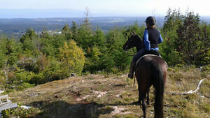 Experienced horse and pet sitter