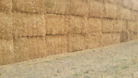 Pea straw for sale!!