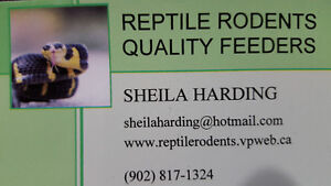 Reptile Rodents is back in business