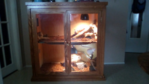 2 bearded dragons and their condo for sale