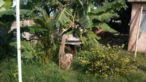 House for rent 15cuc per night.