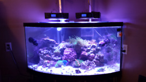 80 gallon Corner custom tank