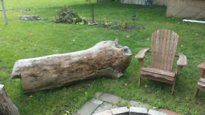Large Ash tree trunk - Live edge wood lumber
