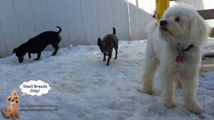 CAGELESS dog sitting day/overnight small dogs certified trainer West Island Greater Montréal image 2