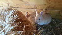 6 cute baby bunnies for sale