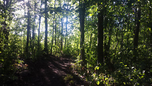 1-3 Acres of Wooded Land