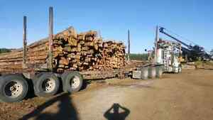 Firewood for sale selling by full semi truckload