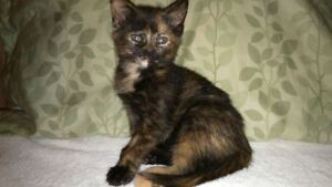 Ginger and a Tortoishell kittens