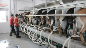 goat milking parlor - rotary or rapid exit