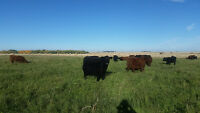 Looking for 15-50 acres of pasture