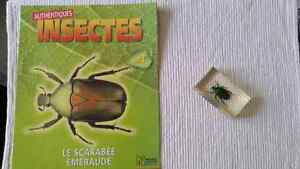 Collection d insectes Saguenay Saguenay-Lac-Saint-Jean image 10
