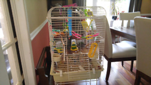 White budgie with accessories