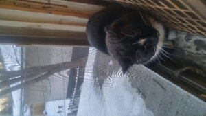 This cat is in my house its not mine