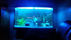 75 Gallon Bow Front Aquarium with Stand