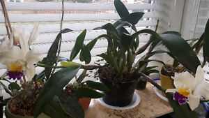 Orchids and supplies (7)