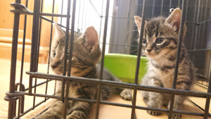 Moroe and Jekyll looking for a forever home