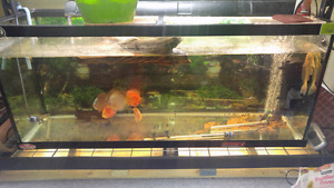 Selling 120 gallon tank with discus