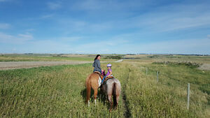 HORSE BACK RIDING LESSONS